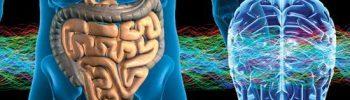 Ce spun cercetătorii despre cel de-al doilea creier stomacul