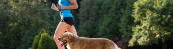 Crezi că adoptarea unui câine este cel mai sănătos lucru pentru tine