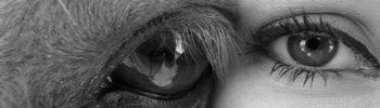 Terapia cu cai poate vindeca depresia, bolile inimii, chiar și cancerul