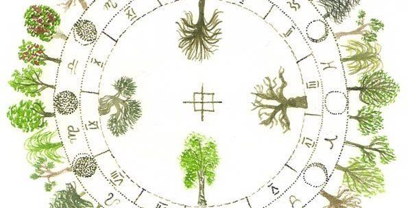 horoscopul arboricol
