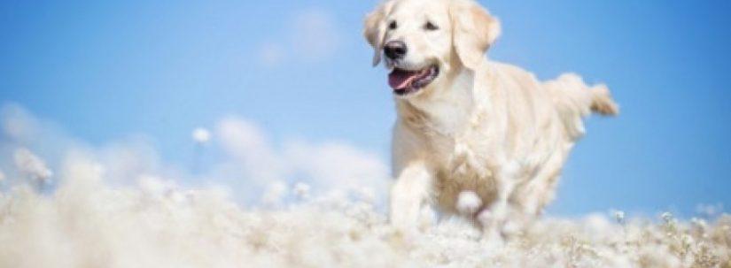 Ce înseamnă Când Visezi Câini Zeniversro