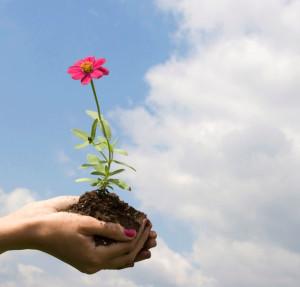 Cum ne putem vindeca prin intermediul naturii 4