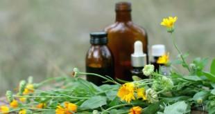 Plante de leac pentru a ne feri de boli în sezonul rece