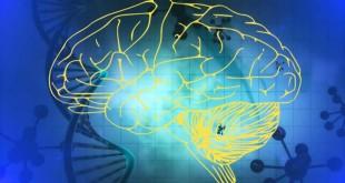 Intuitie si instinct Când ne folosim de intuiţie şi probabilitate?