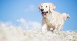 Ce înseamnă când visezi câini