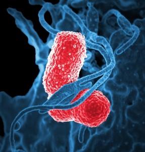 Influenta virusilor si a armelo bacteriologice asupra societatii in care traim 2