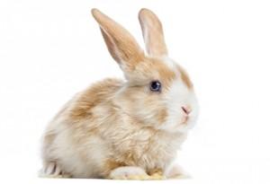 Ce inseamna cand visezi un iepure alb Intepretarea visului in care apare un iepure alb 2