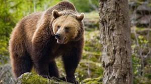 Ce inseamna cand visezi un urs? Interpretarea visului in care apare un urs 2