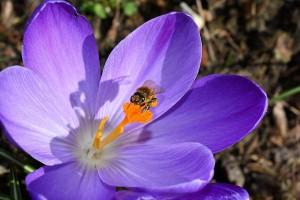 Ce inseamna cand visezi albine 3
