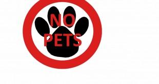 Acest articol nu este pentru iubitorii de animale