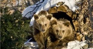 Religie si credinta Ce e bine să facem de Stretenie- Ziua Ursului